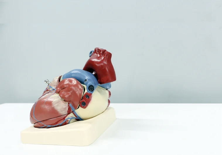 IMST and Cardiovascular Health