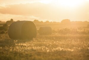 A farm requires careful planning for future generations.