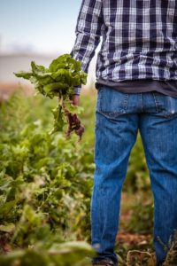 Farmers need to focus on their estate planning.