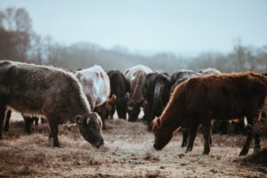 Passing a ranch to the next generation requires estate planning.